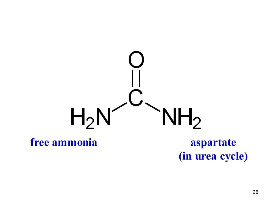 aspartate (in urea cycle)