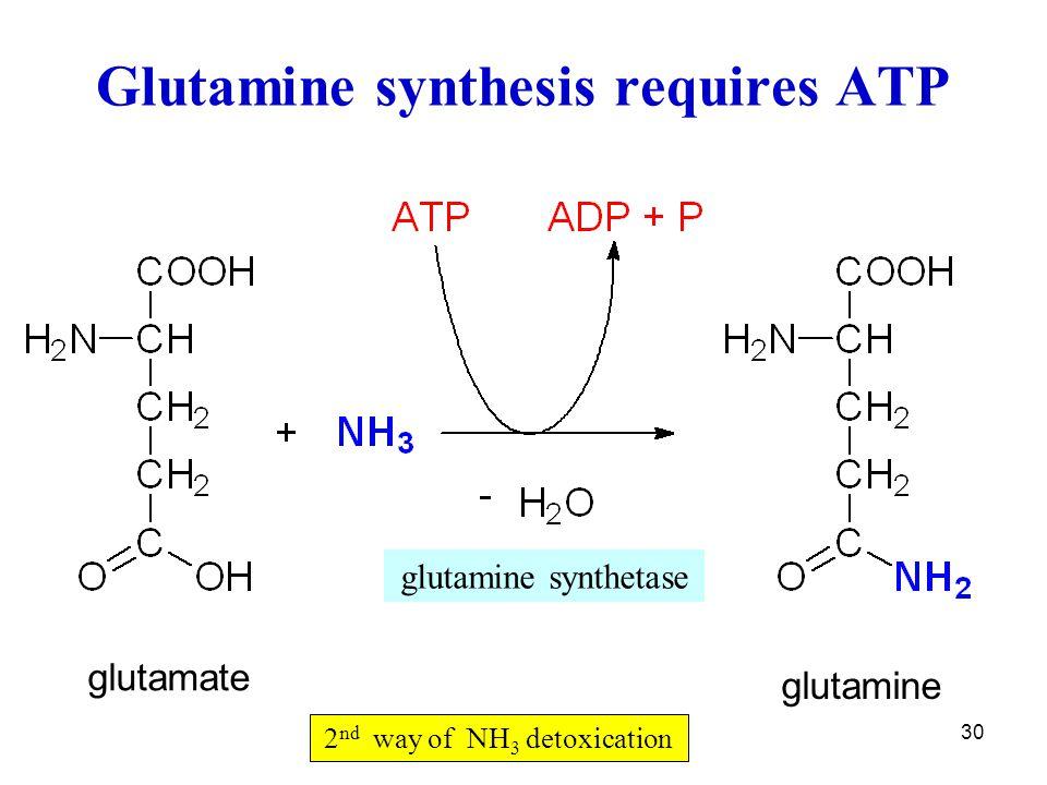 Glutamine synthesis requires ATP