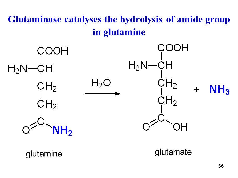 Glutaminase catalyses the hydrolysis of amide group in glutamine