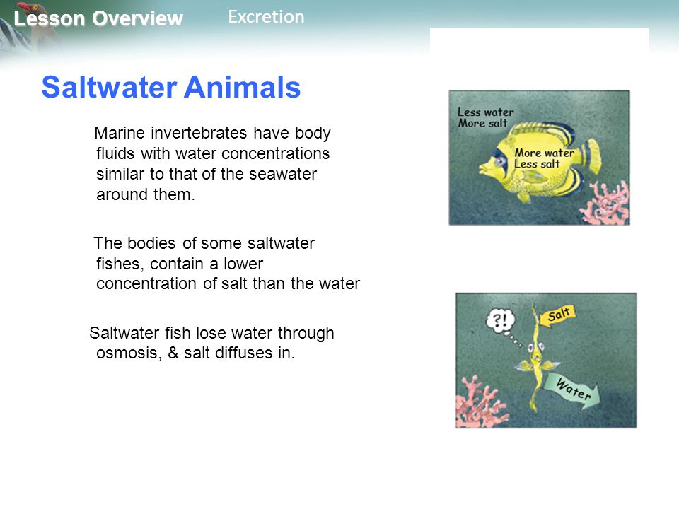 Saltwater Animals Marine invertebrates have body fluids with water concentrations similar to that of the seawater around them.