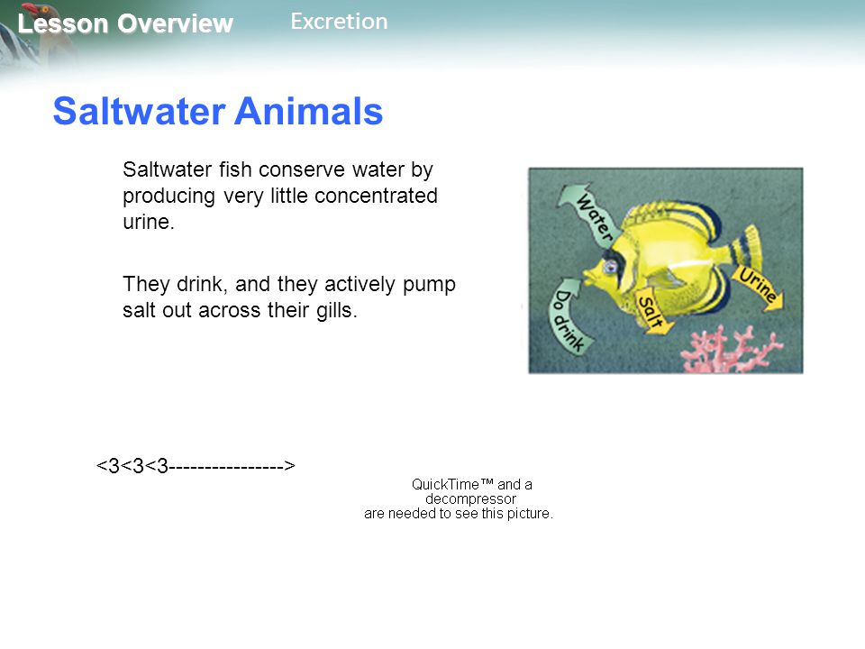 Saltwater Animals Saltwater fish conserve water by producing very little concentrated urine.