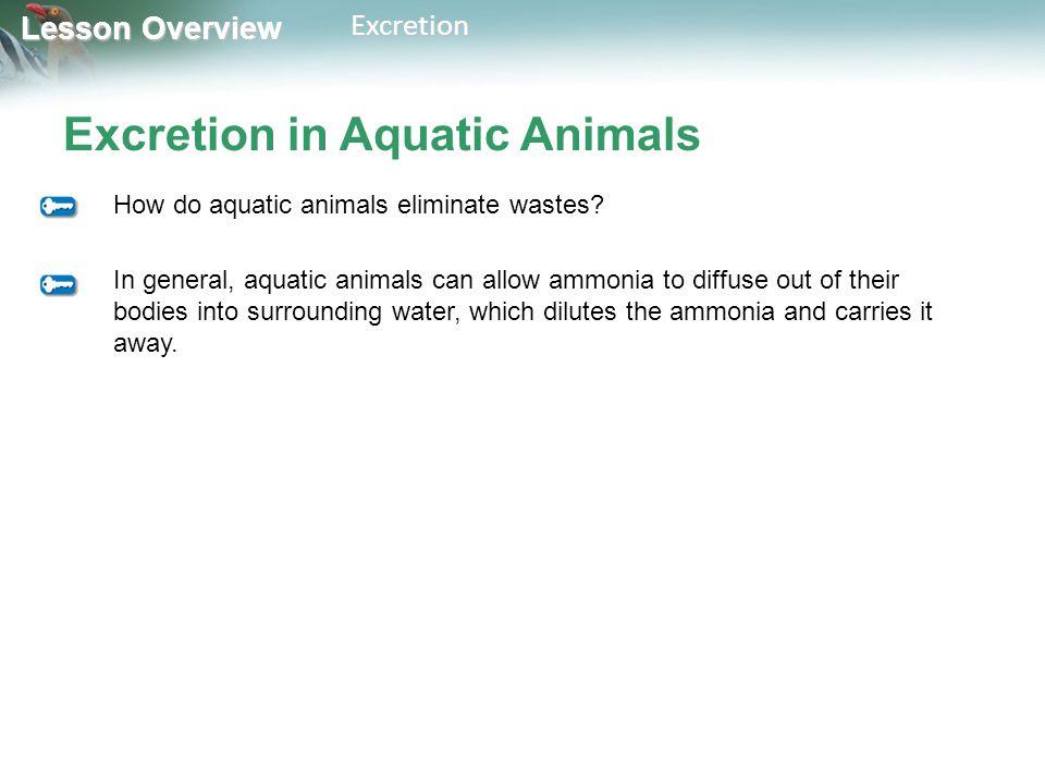 Excretion in Aquatic Animals