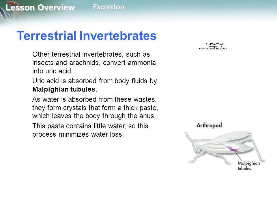 Terrestrial Invertebrates