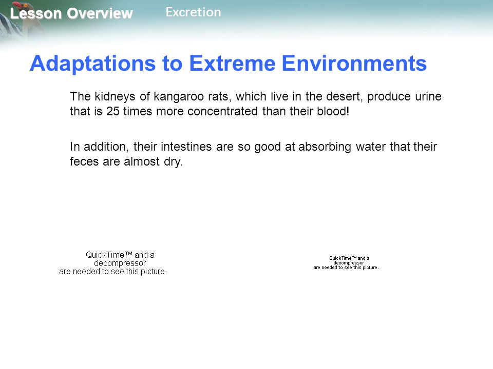 Adaptations to Extreme Environments