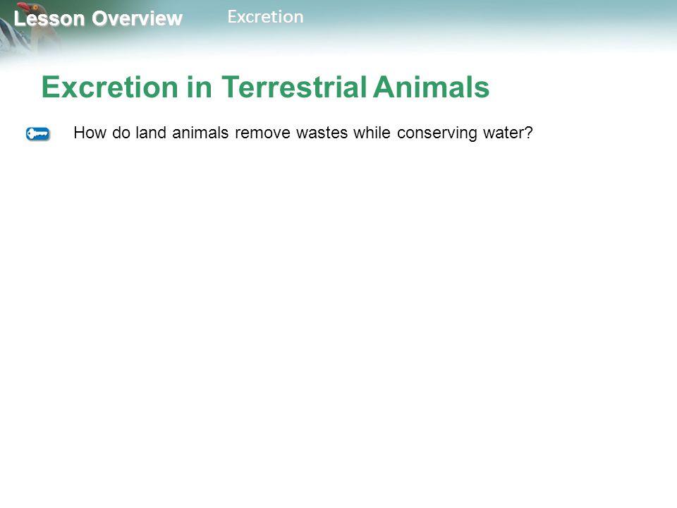 Excretion in Terrestrial Animals