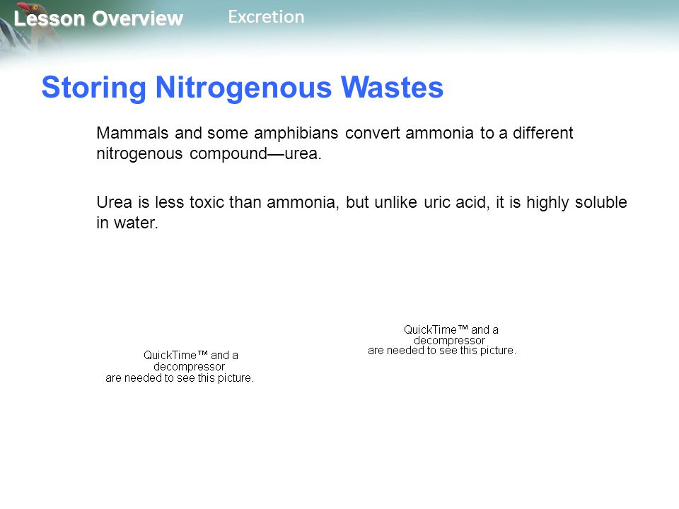 Storing Nitrogenous Wastes