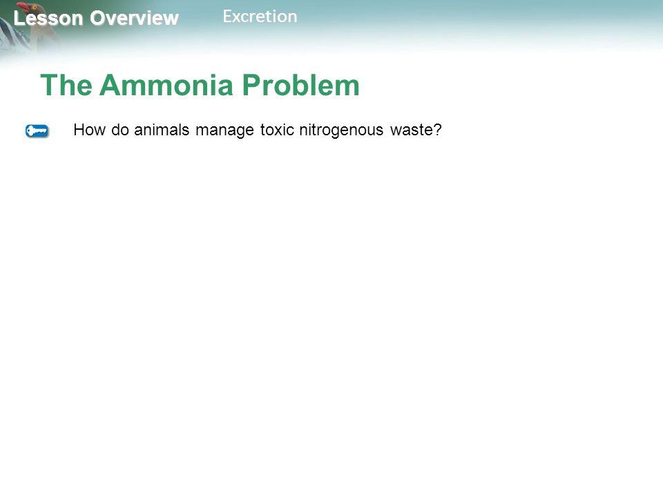 The Ammonia Problem How do animals manage toxic nitrogenous waste