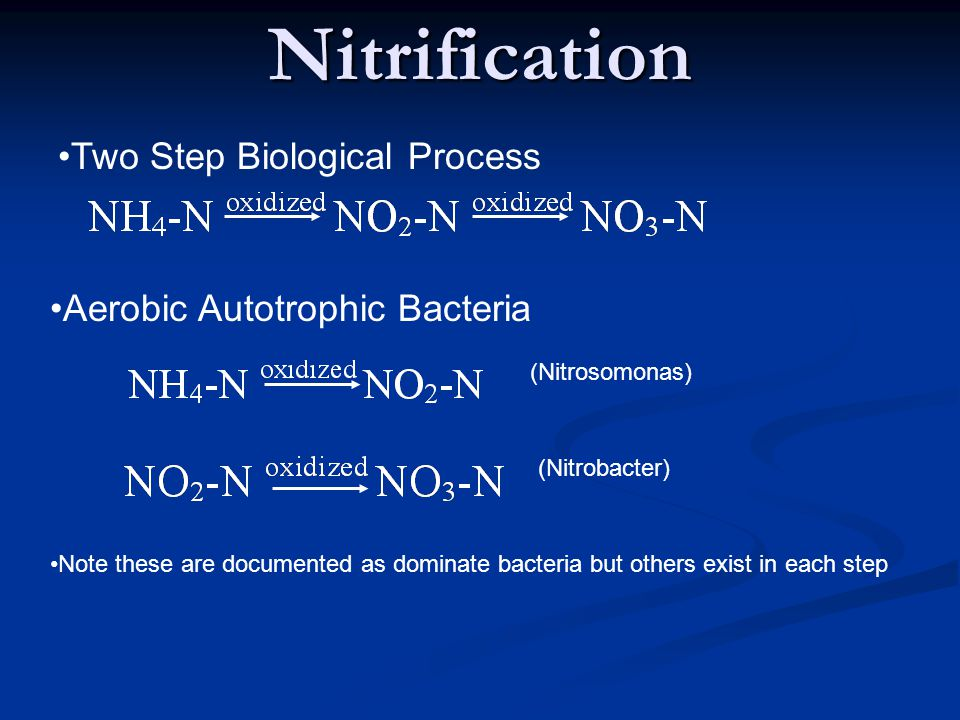 Nitrification Two Step Biological Process Aerobic Autotrophic Bacteria