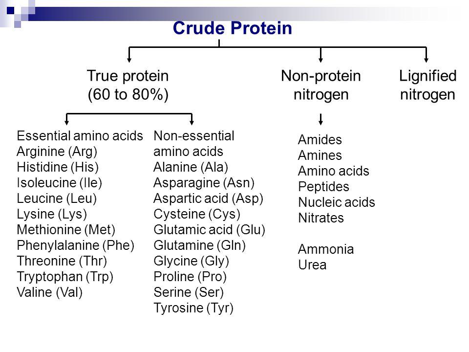 Crude Protein True protein (60 to 80%) Non-protein nitrogen Lignified