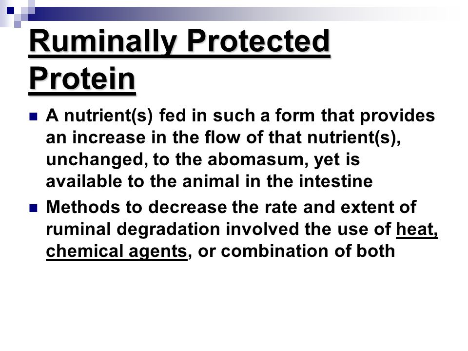 Ruminally Protected Protein