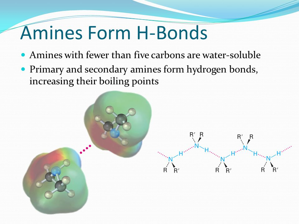 Amines Form H-Bonds Amines with fewer than five carbons are water-soluble.