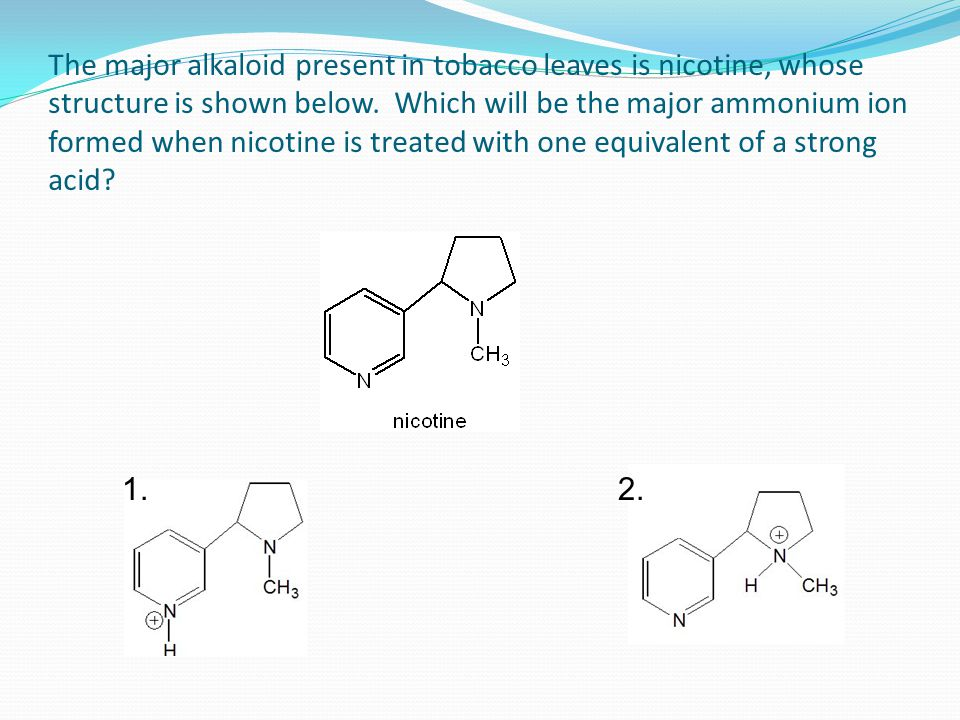 The major alkaloid present in tobacco leaves is nicotine, whose structure is shown below. Which will be the major ammonium ion formed when nicotine is treated with one equivalent of a strong acid