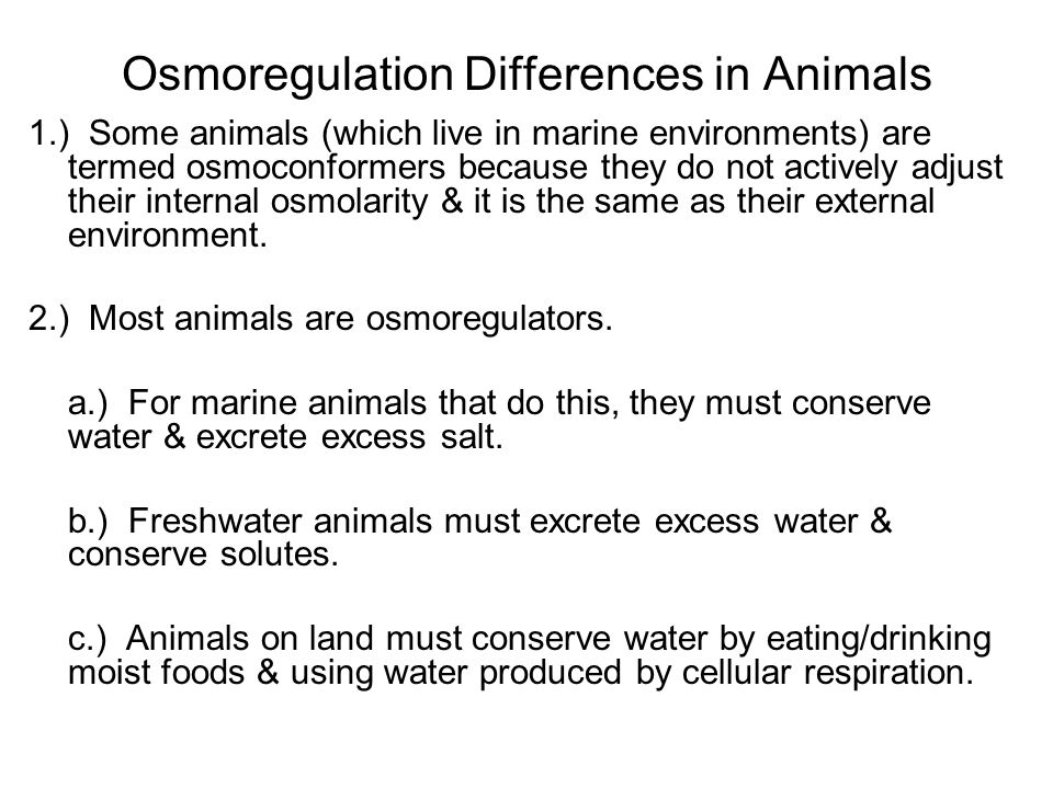 Osmoregulation Differences in Animals