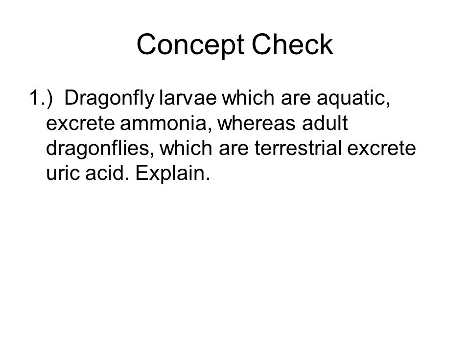 Concept Check 1.) Dragonfly larvae which are aquatic, excrete ammonia, whereas adult dragonflies, which are terrestrial excrete uric acid.