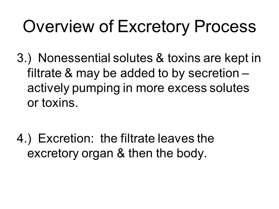 Overview of Excretory Process