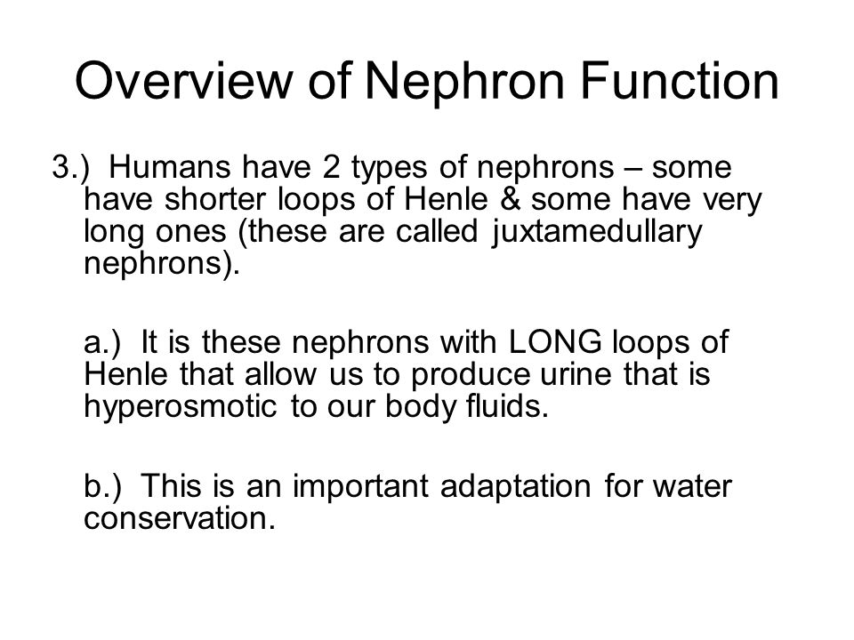 Overview of Nephron Function