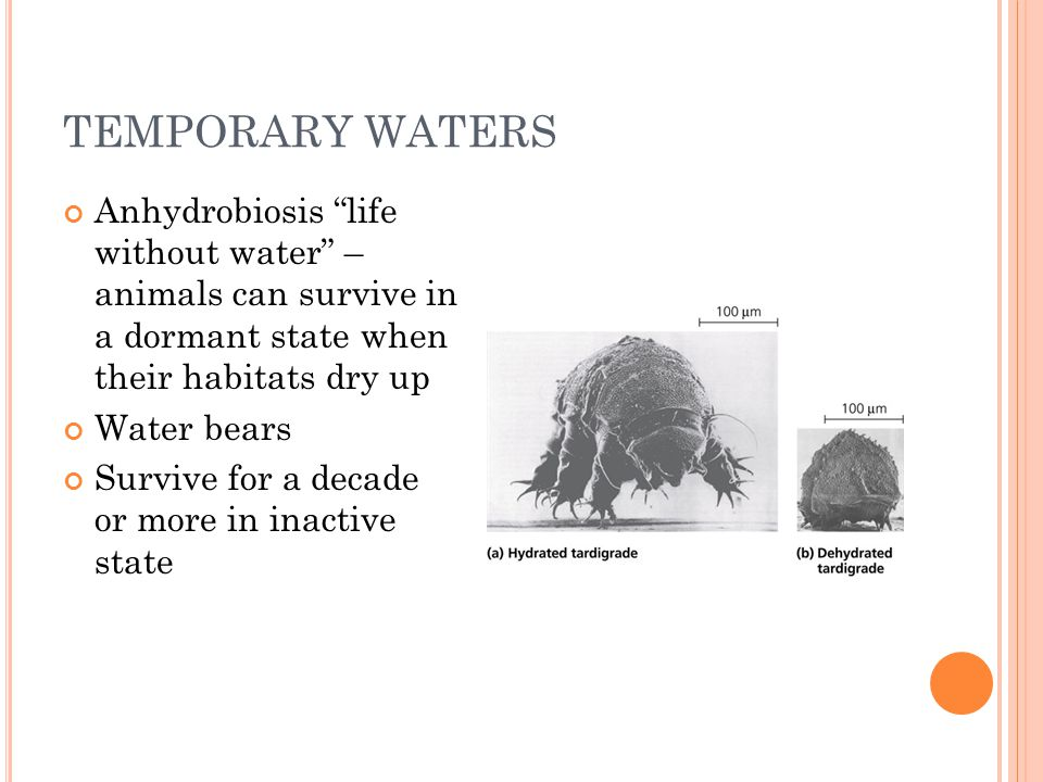 TEMPORARY WATERS Anhydrobiosis life without water – animals can survive in a dormant state when their habitats dry up.