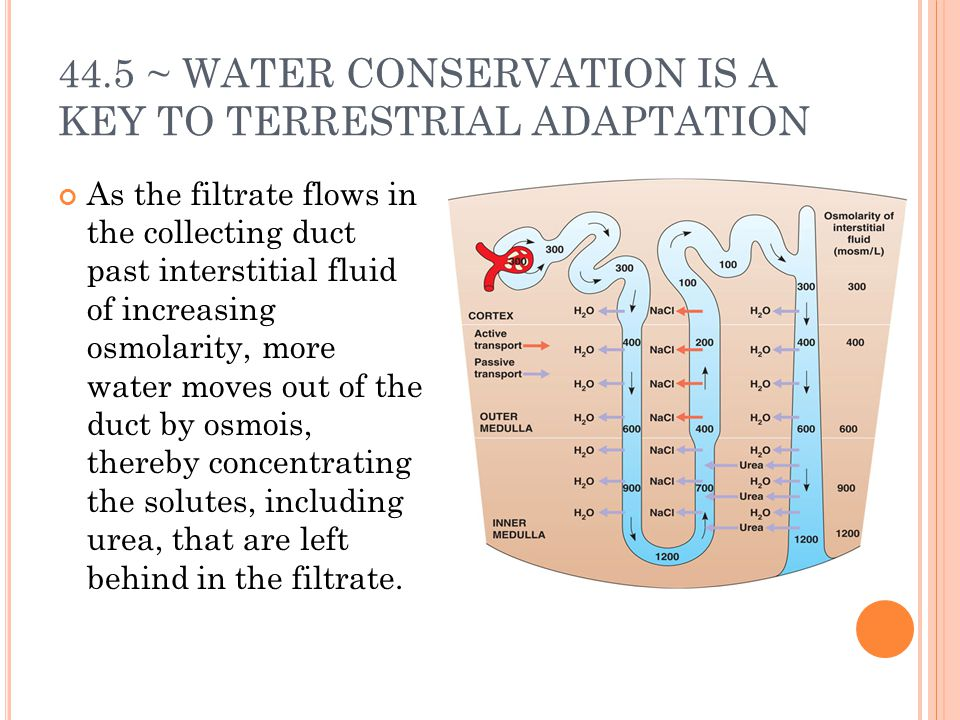 44.5 ~ WATER CONSERVATION IS A KEY TO TERRESTRIAL ADAPTATION
