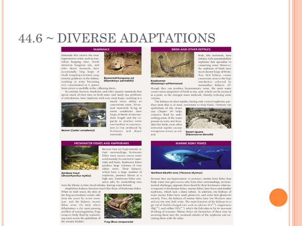 44.6 ~ DIVERSE ADAPTATIONS