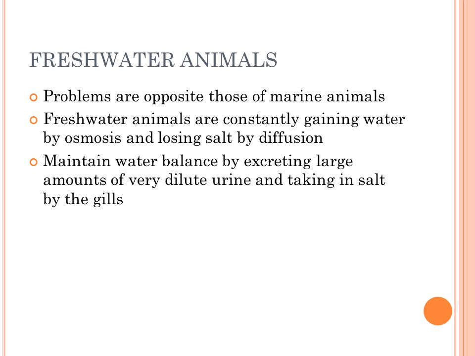 FRESHWATER ANIMALS Problems are opposite those of marine animals