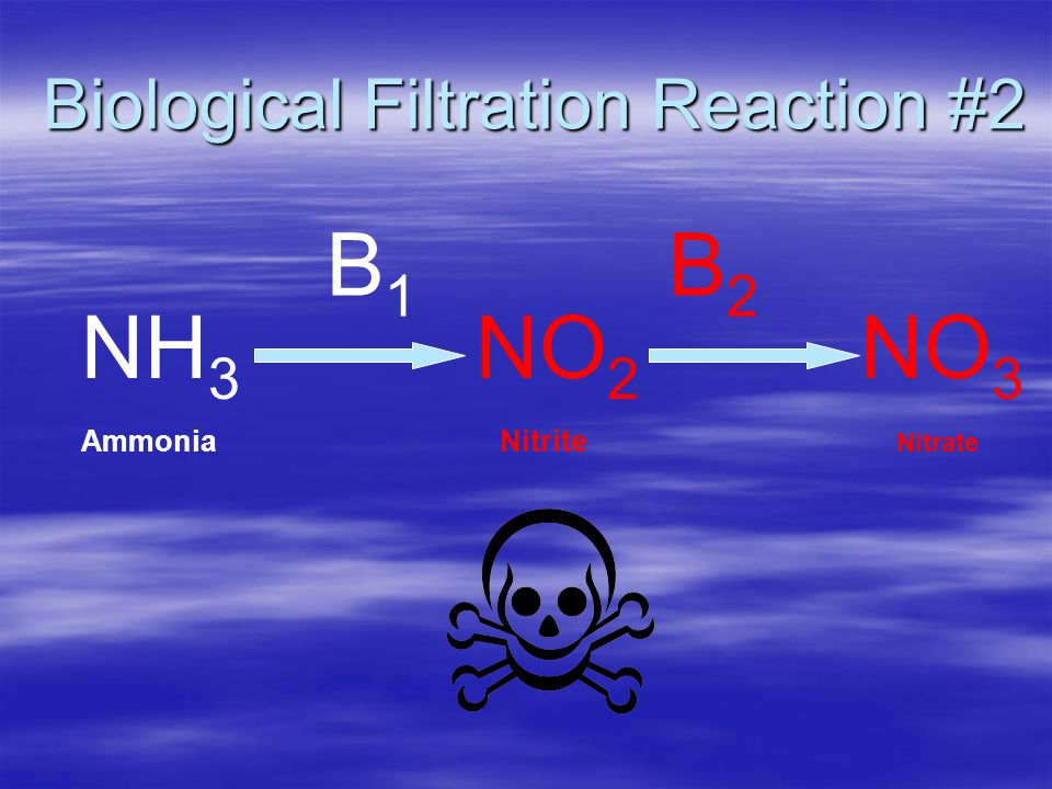 Biological Filtration Reaction #2