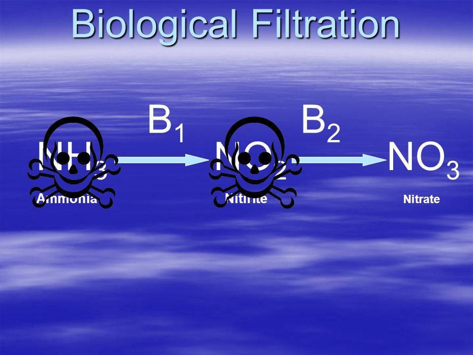 Biological Filtration