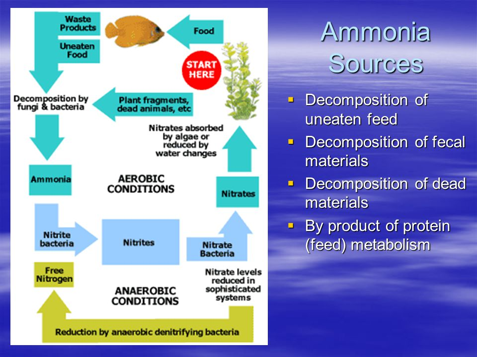Ammonia Sources Decomposition of uneaten feed