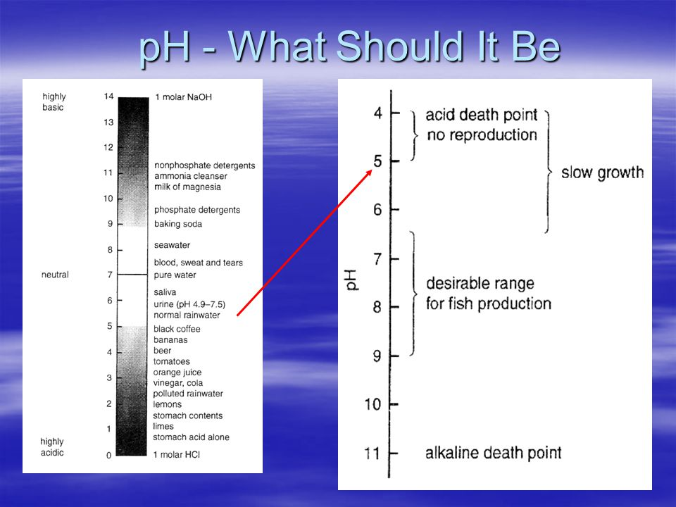 pH - What Should It Be