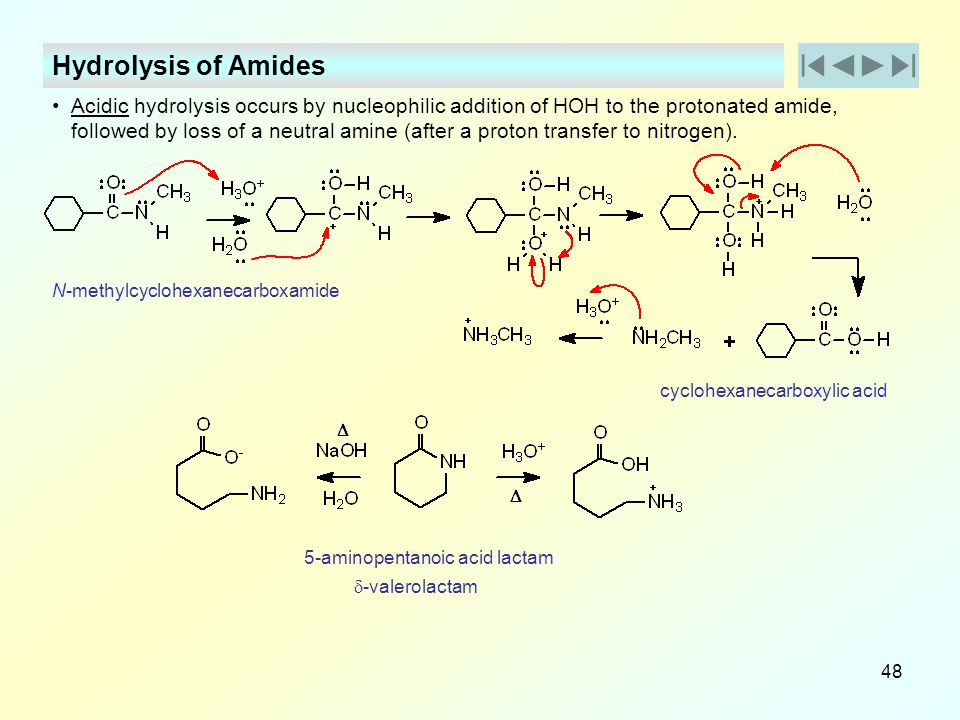 Hydrolysis of Amides