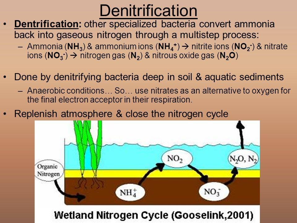 a comprehensive guide to the nitrogen gaseous element Get periodic table facts on the chemical and physical properties of the element nitrogen (azote) nitrogen or nitrogen gas also can be prepared by heating a.