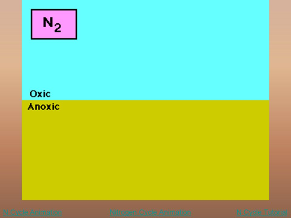 N Cycle Animation Nitrogen Cycle Animation N Cycle Tutorial