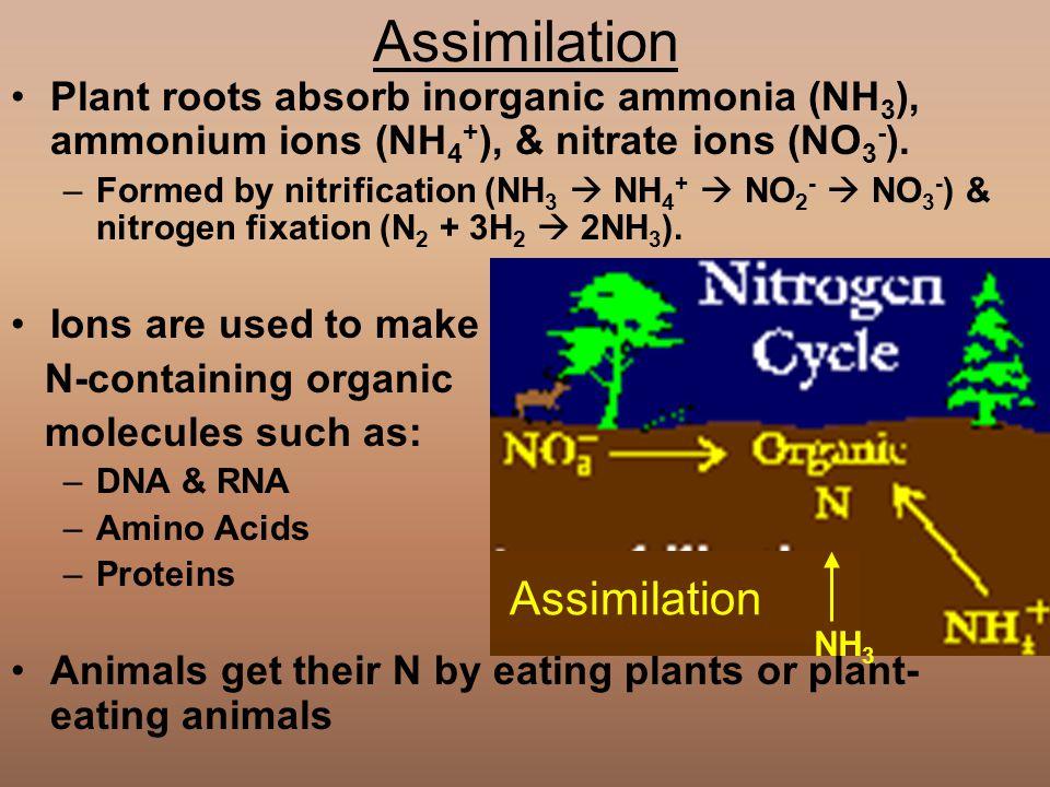 Assimilation Assimilation