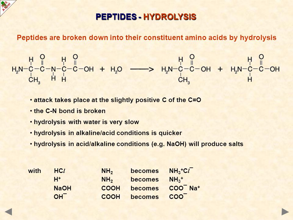 PEPTIDES - HYDROLYSIS Peptides are broken down into their constituent amino acids by hydrolysis.