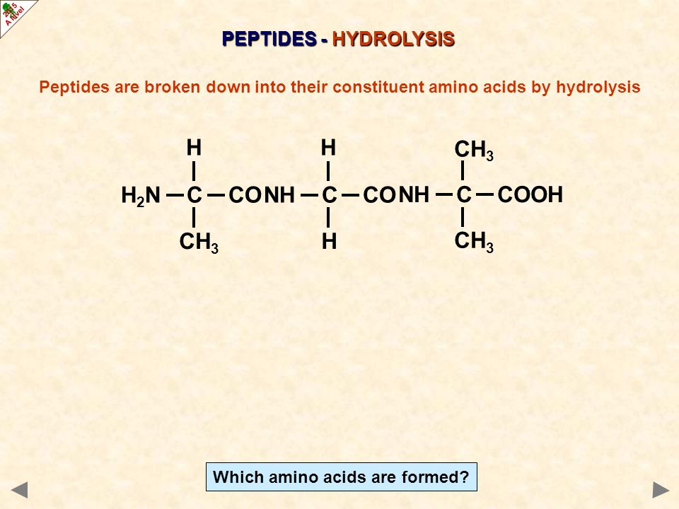 Which amino acids are formed