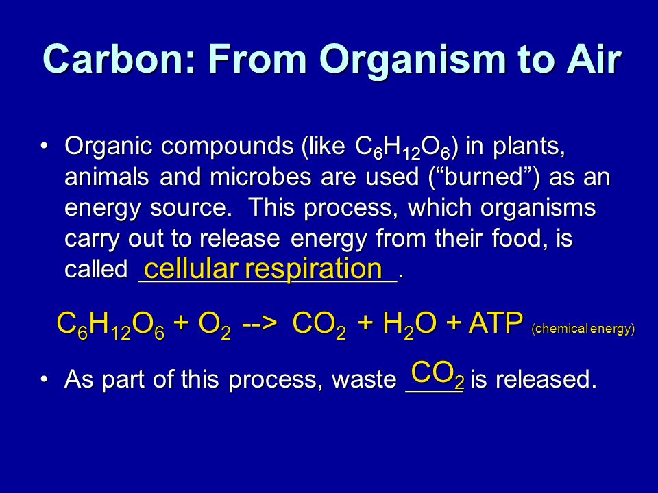 Carbon: From Organism to Air
