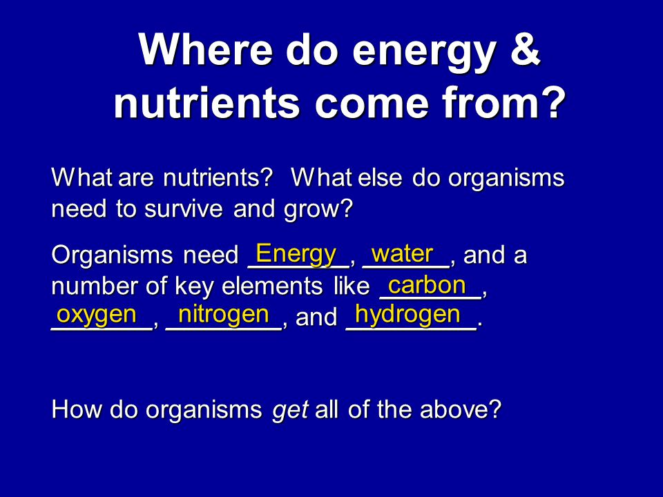 Where do energy & nutrients come from