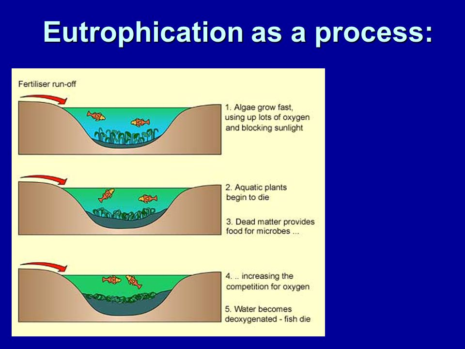 Eutrophication as a process: