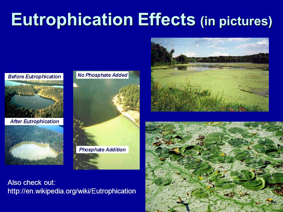 Eutrophication Effects (in pictures)