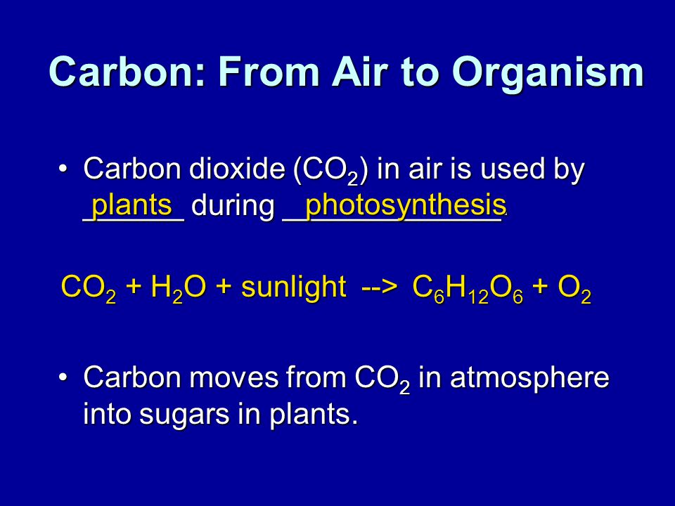 Carbon: From Air to Organism