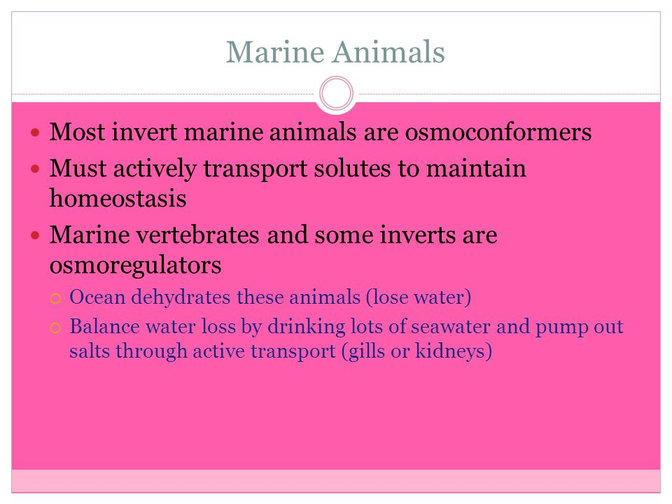 Marine Animals Most invert marine animals are osmoconformers