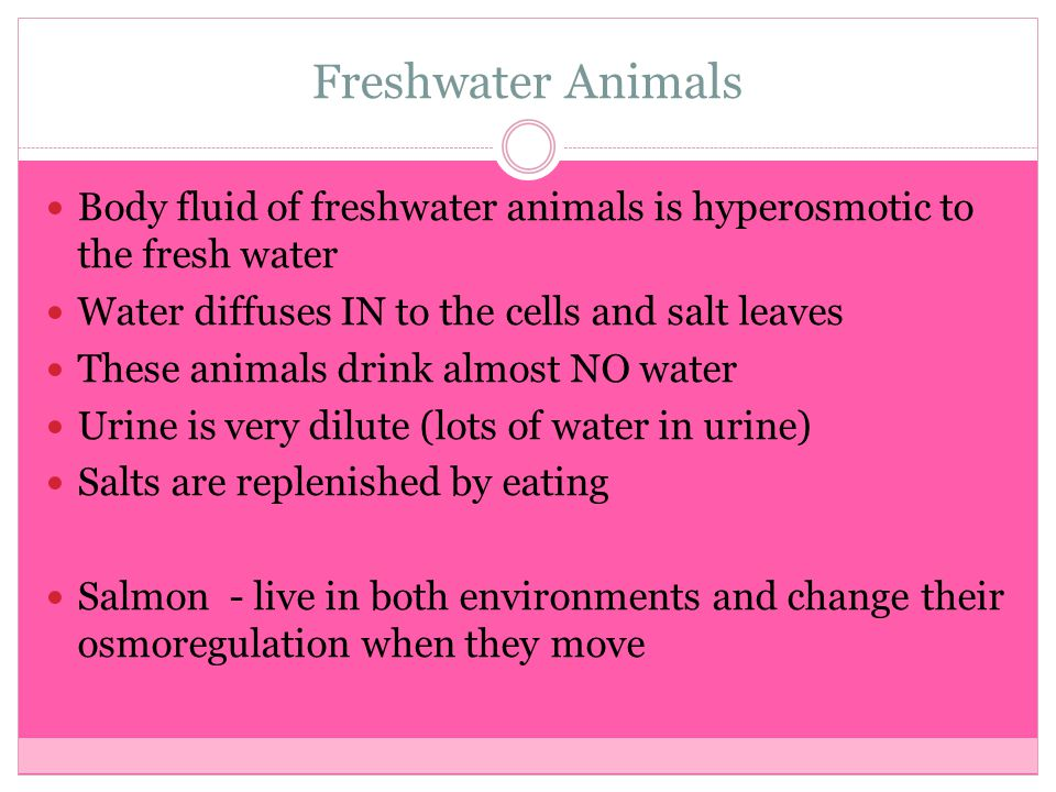 Freshwater Animals Body fluid of freshwater animals is hyperosmotic to the fresh water. Water diffuses IN to the cells and salt leaves.