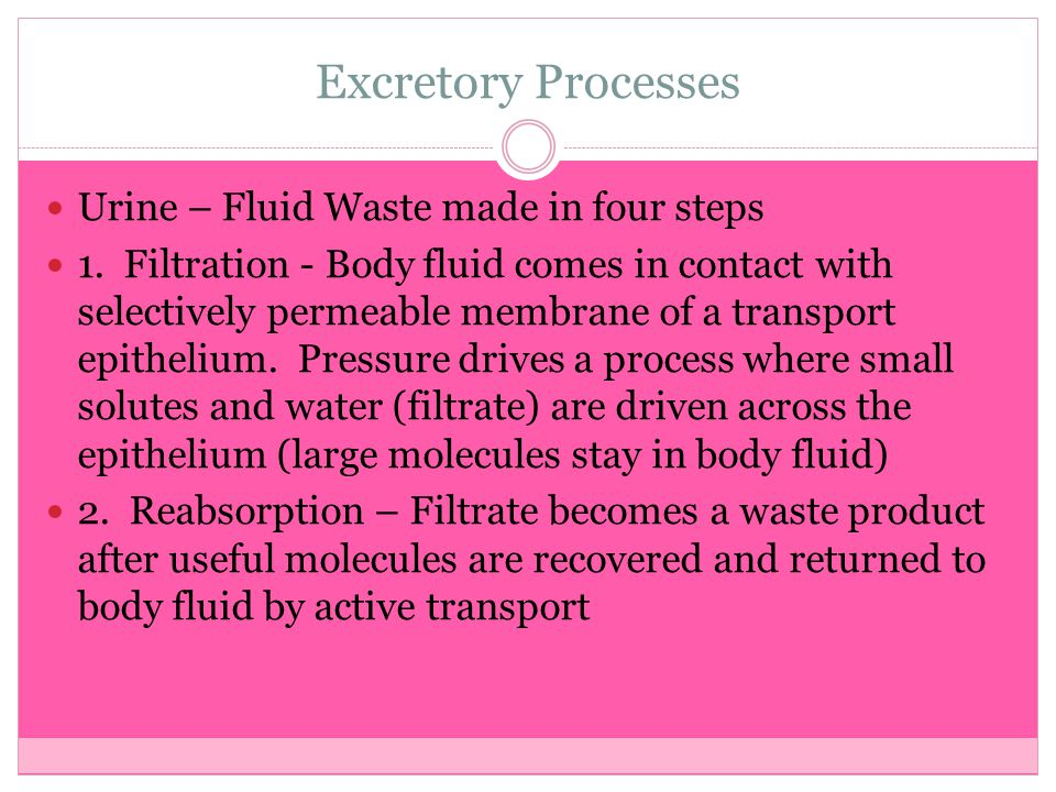 Excretory Processes Urine – Fluid Waste made in four steps