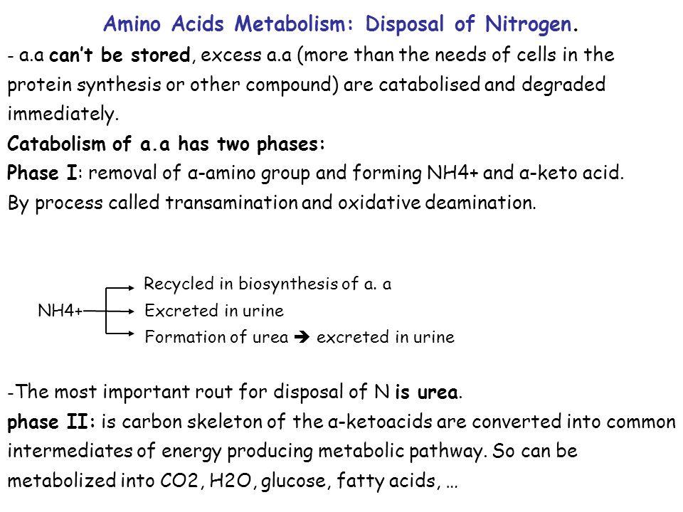 Amino Acids Metabolism: Disposal of Nitrogen.