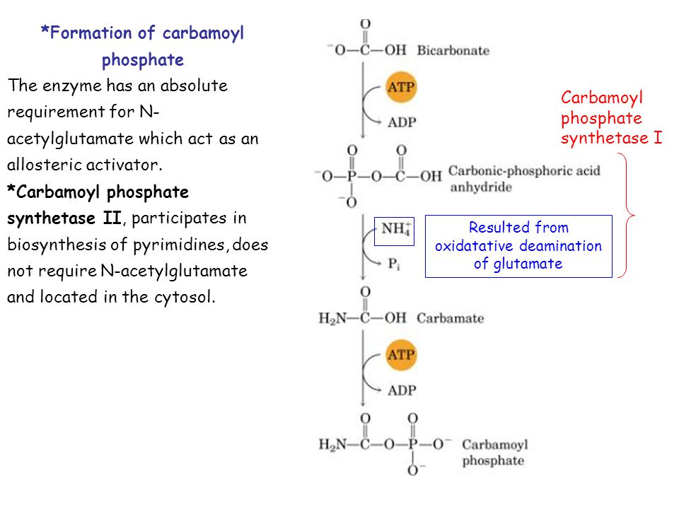*Formation of carbamoyl phosphate