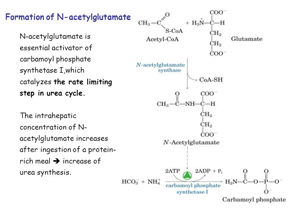 Formation of N-acetylglutamate