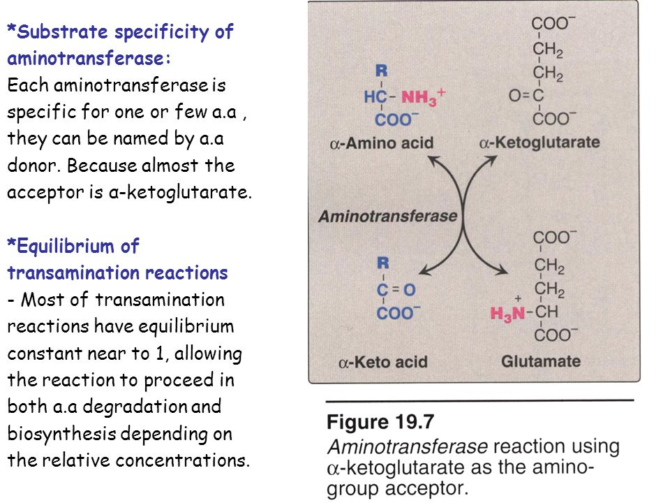 *Substrate specificity of aminotransferase: