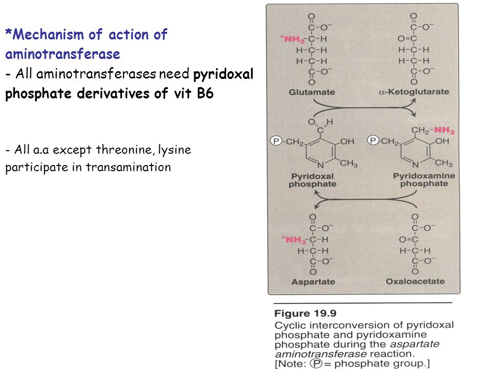 *Mechanism of action of aminotransferase
