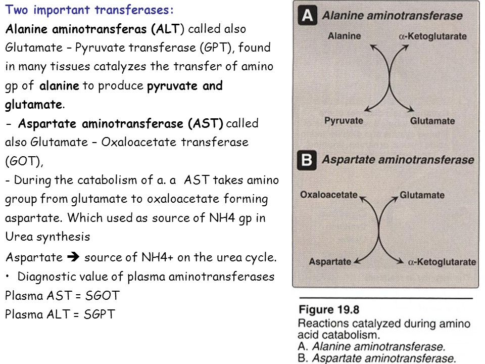 Two important transferases: