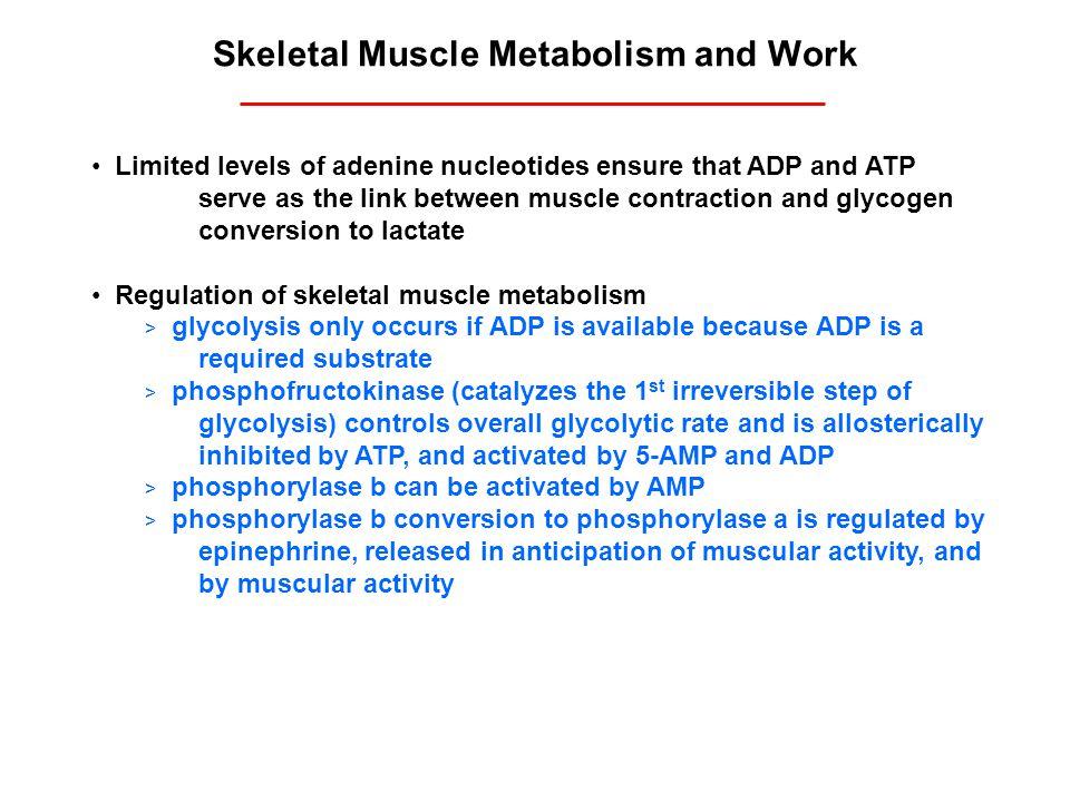 Skeletal Muscle Metabolism and Work
