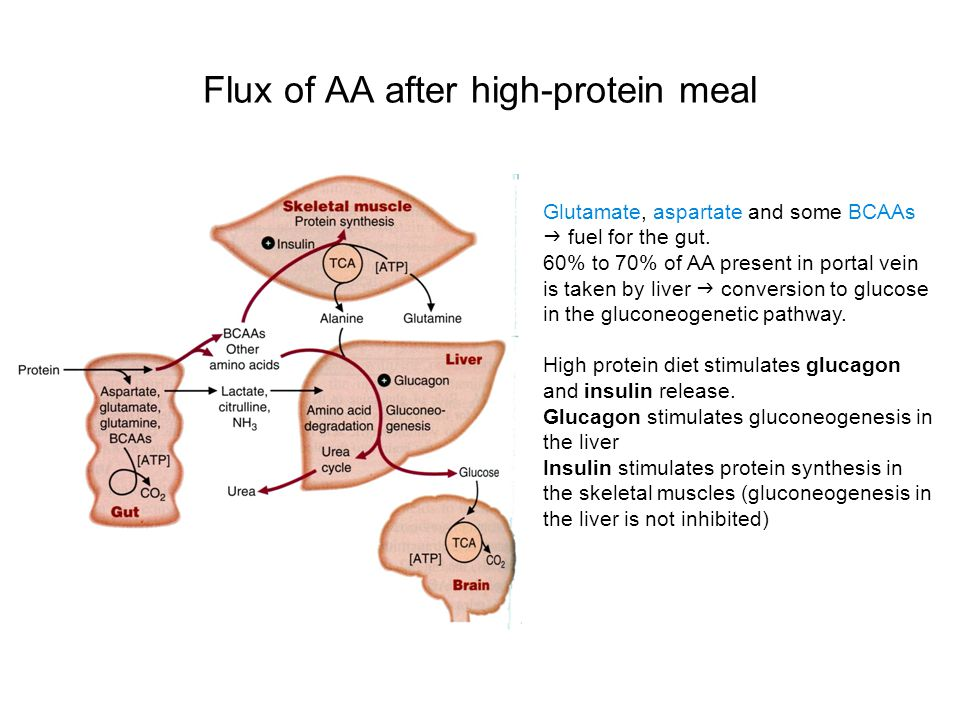 Flux of AA after high-protein meal